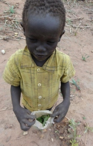 One of the desperate children with their meal of leaves.