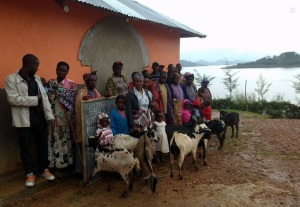 A few of the goats that we helped to provide for single mothers in Uganda!
